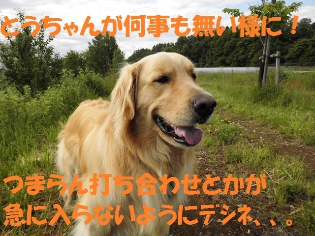 CIMG1193_P_2017061422104729c.jpg