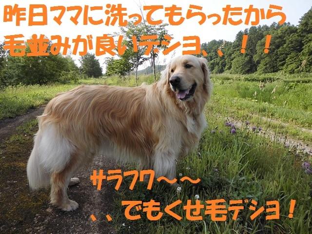 CIMG1300_P_2017062021551065c.jpg