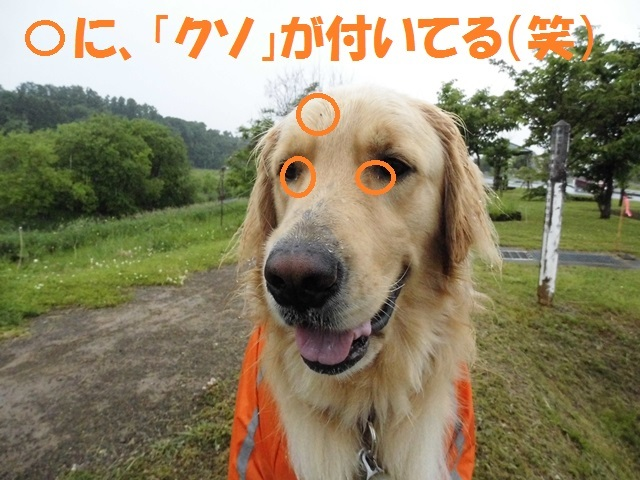 CIMG1314_P.jpg