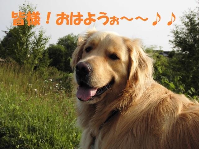CIMG1384_P.jpg