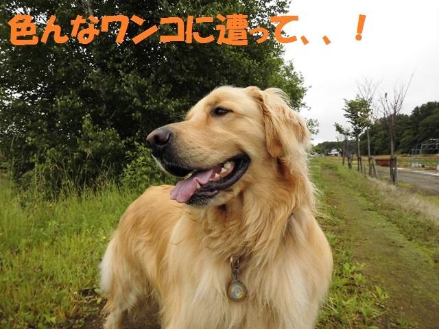 CIMG1398_P.jpg