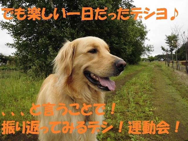 CIMG1401_P.jpg