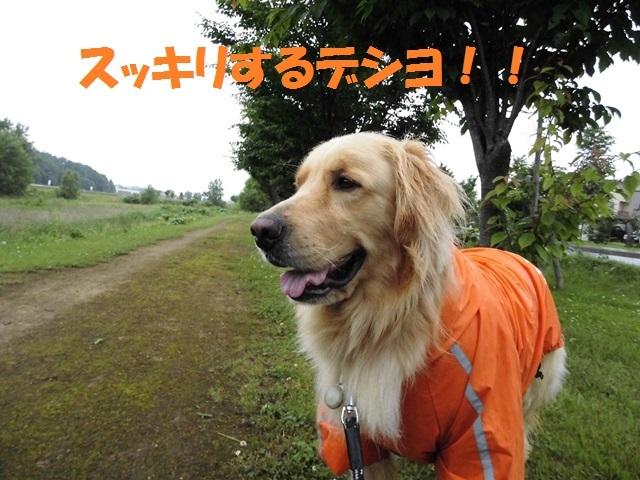 CIMG1408_P.jpg