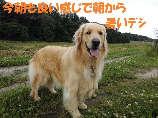 CIMG1420_P.jpg