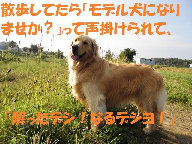 CIMG1429_P.jpg