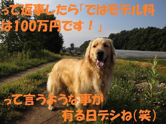 CIMG1430_P.jpg