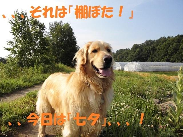 CIMG1435_P.jpg