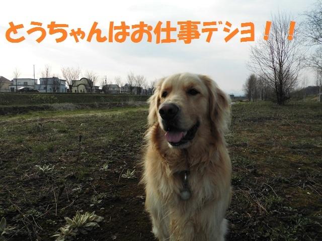 CIMG4791_P.jpg
