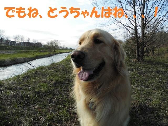 CIMG4797_P.jpg