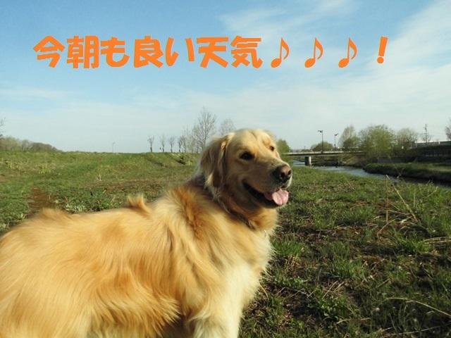 CIMG4811_P.jpg