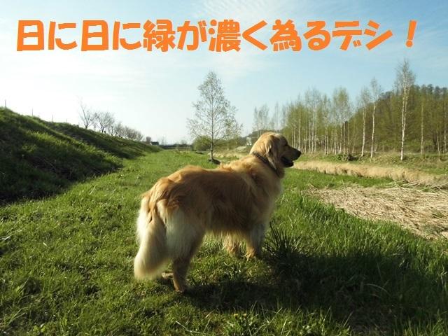 CIMG4814_P.jpg