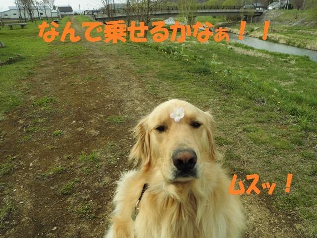 CIMG4816_P.jpg