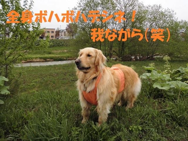 CIMG4846_P.jpg