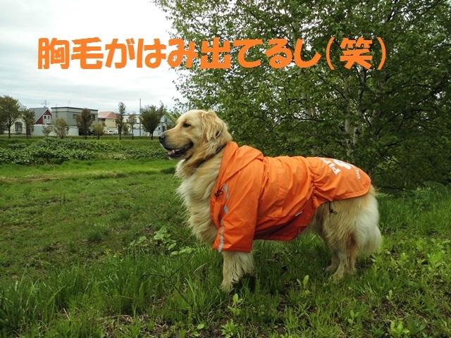 CIMG4864_P.jpg