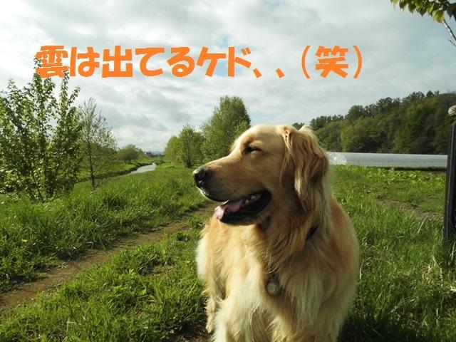 CIMG4869_P.jpg