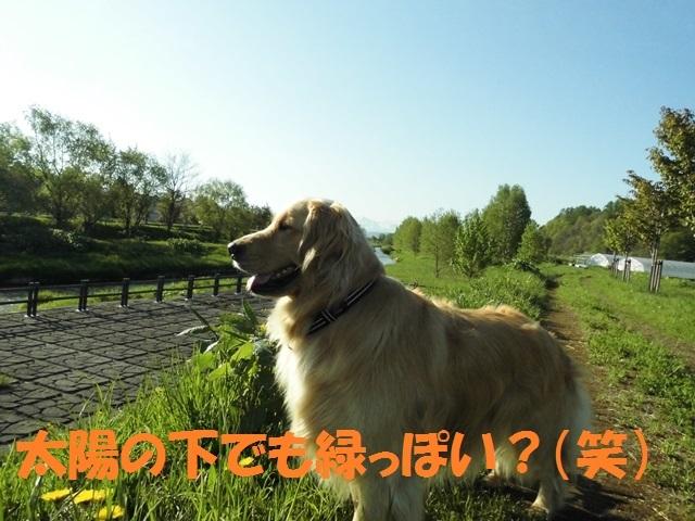 CIMG4877_P.jpg