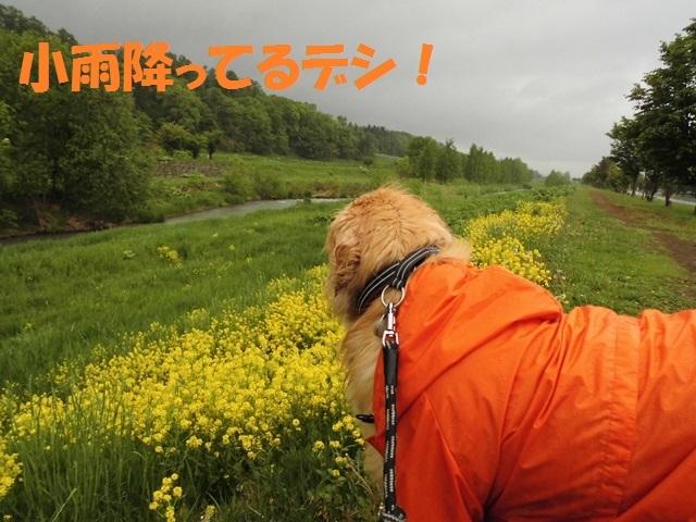 CIMG4897_P.jpg