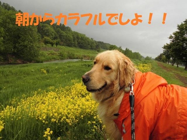 CIMG4898_P.jpg