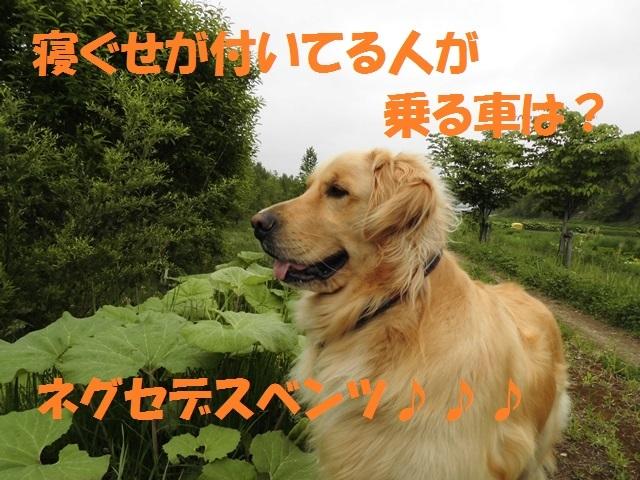 CIMG4901_P.jpg