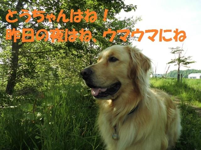 CIMG4922_P.jpg