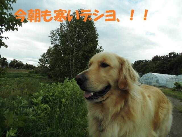 CIMG4932_P.jpg
