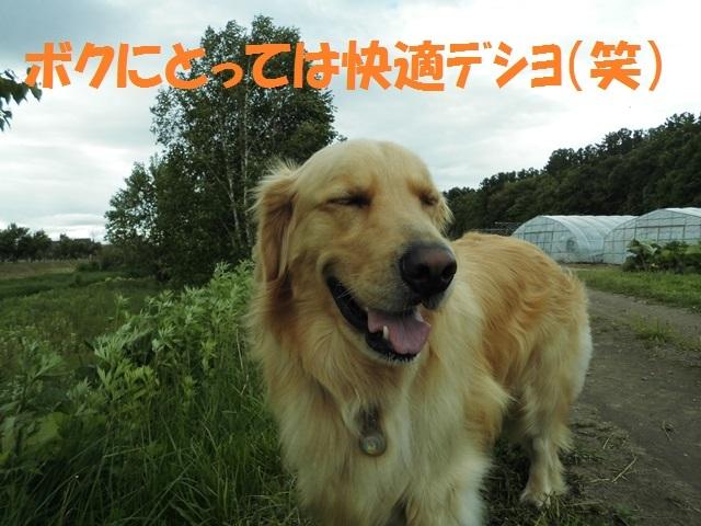 CIMG4934_P.jpg