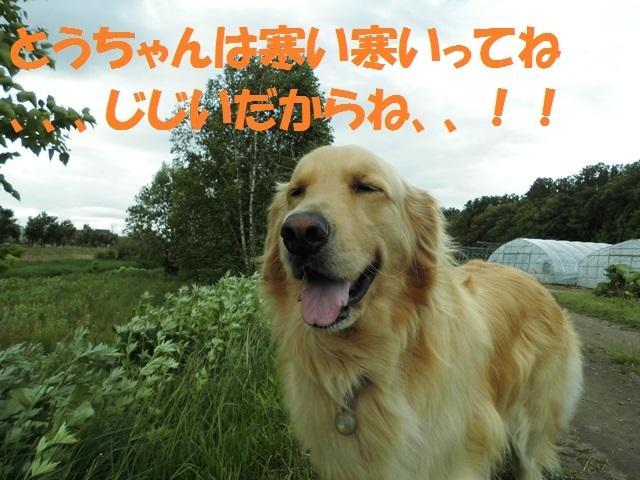 CIMG4935_P.jpg