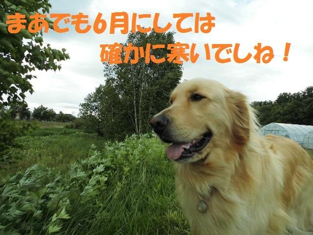 CIMG4936_P.jpg