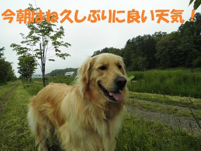 CIMG4939_P.jpg