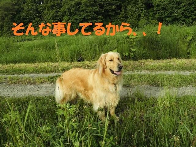 CIMG4946_P.jpg