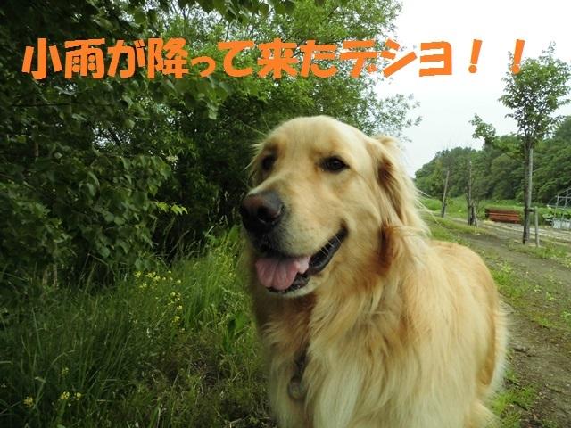 CIMG4949_P.jpg