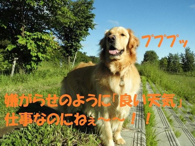 CIMG4964_P.jpg