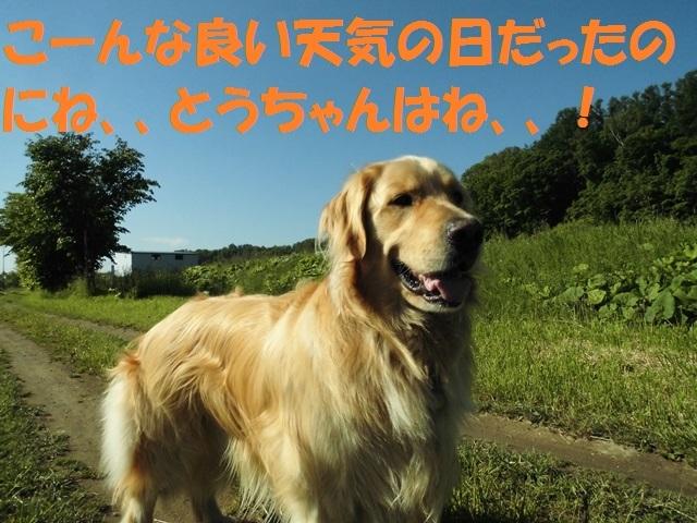 CIMG4972_P.jpg