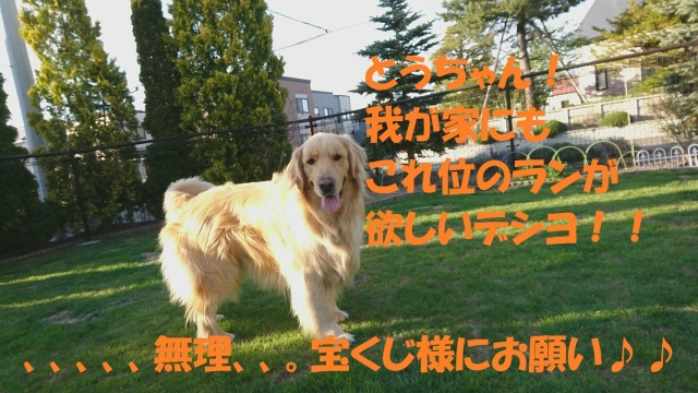 IMG_3636.jpg