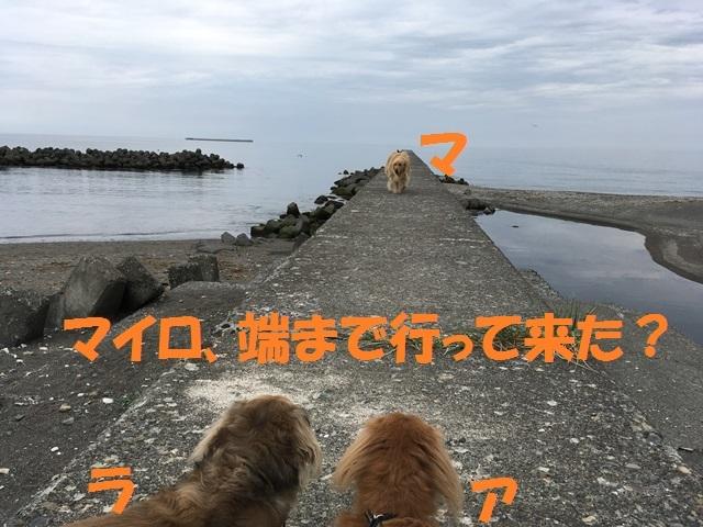 IMG_3681_P.jpg