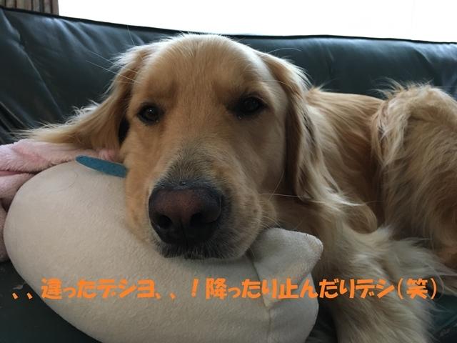 IMG_3771_P.jpg