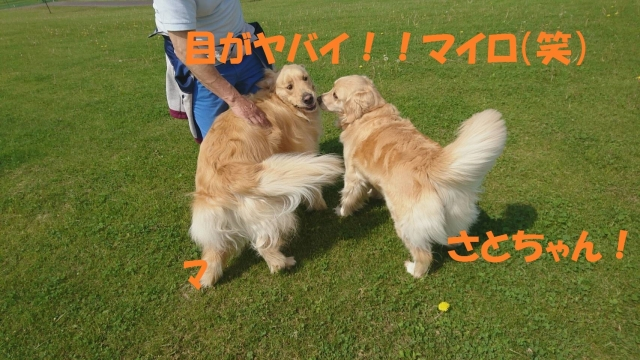 IMG_3791_201705312109022c6.jpg
