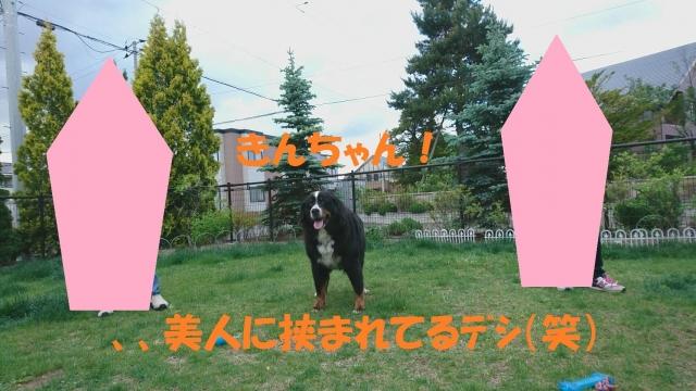 IMG_3896_201706082124079c2.jpg