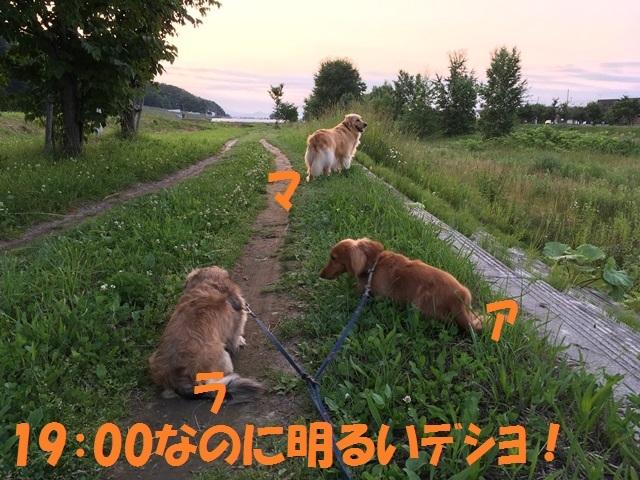 IMG_4416_P.jpg