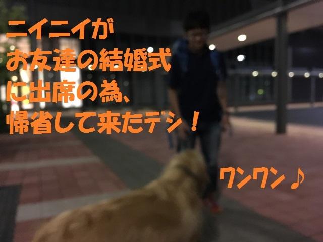 IMG_4427_P.jpg