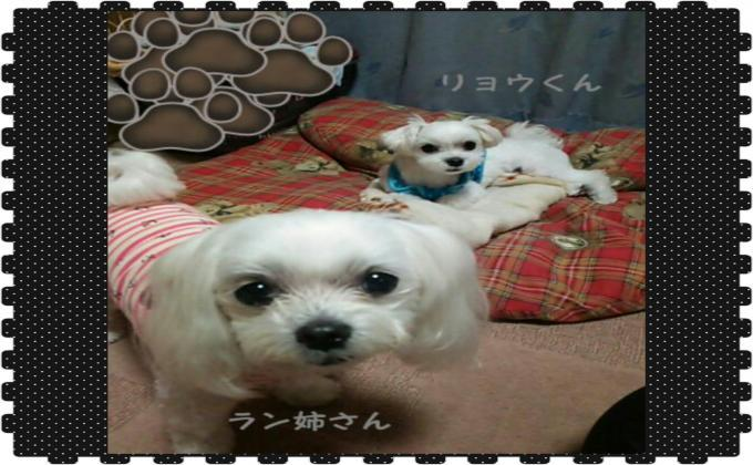 PhotoGrid_1495878696256_convert_20170527185950.jpg
