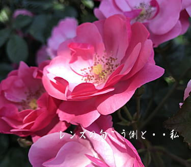 rosegarden4.jpg