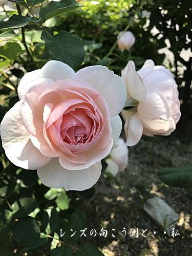 rosegarden5.jpg