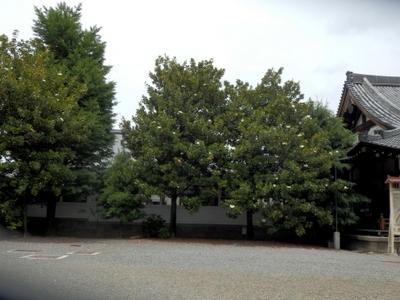 東本願寺 (22)
