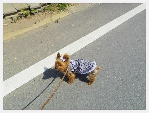 散歩でキャベツIMGP6265-20170425