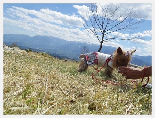 八ヶ岳IMGP6316-20170505