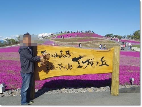 芝桜IMGP6495-20170604