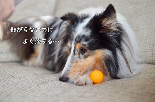 IMG_5408.jpg