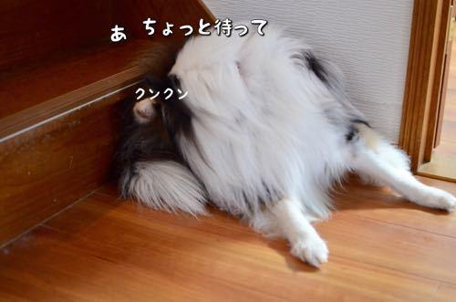 IMG_5685.jpg