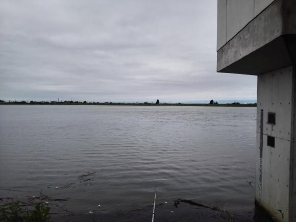 小貝川 巨鯉 ソウギョ 茨城 つくば市 釣り パン